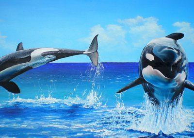 Diversen - Orca's
